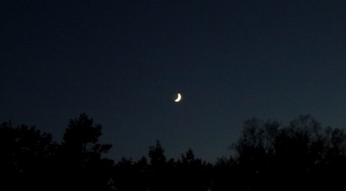 Zunehmender Mond über Baumreihe im Dunkeln.