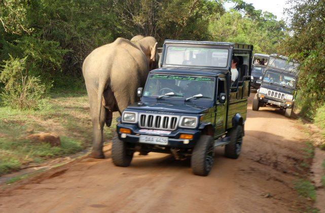 Der Yala Nationalpark von Sri Lanka.