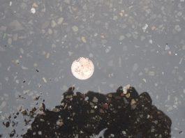 Das Geld liegt auf der Straße. 2-Cent-Münze liegt auf dem Berliner Asphalt vor dem Patentamt.