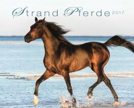 """Pferde am Stand: stehend, im Schritt, Trab und hopp im Galopp – Annotation zum Kalender """"Stand Pferde"""" 2017"""